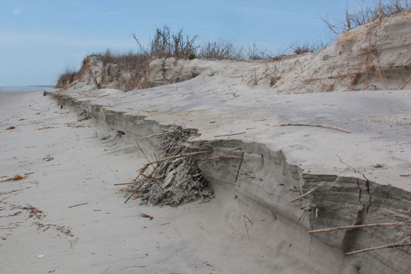 Eroding beach on Captain Sams Spit, photograph by Cecelia Dailey